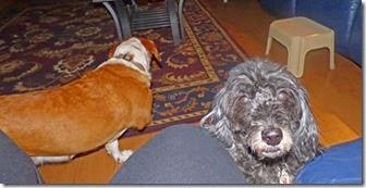 Hattie and Skruffy