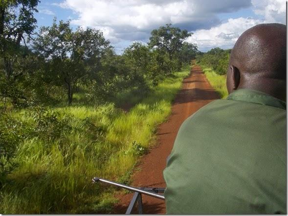 Jeep Safari Mole National Park