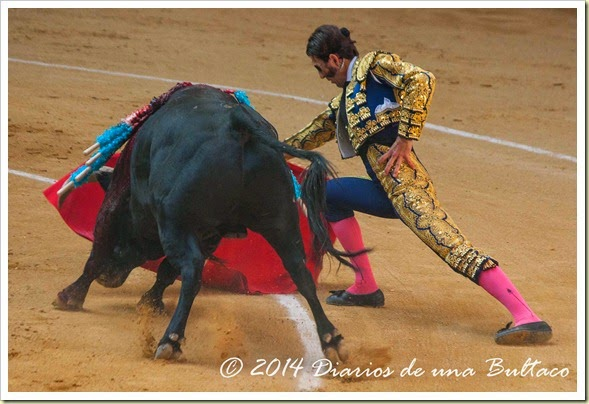 Toros 2014 (1)-9