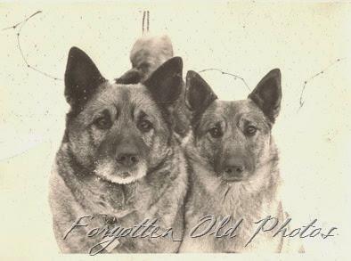Dogs PR Antiques