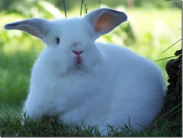 cute-funny-animals-5