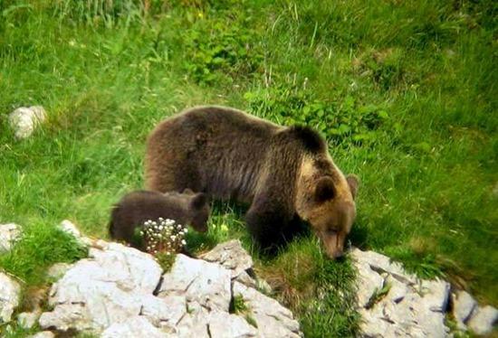 El proyecto 'Frutos para el oso', finalista de los premios EOCA