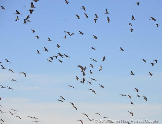 Incoming Cranes