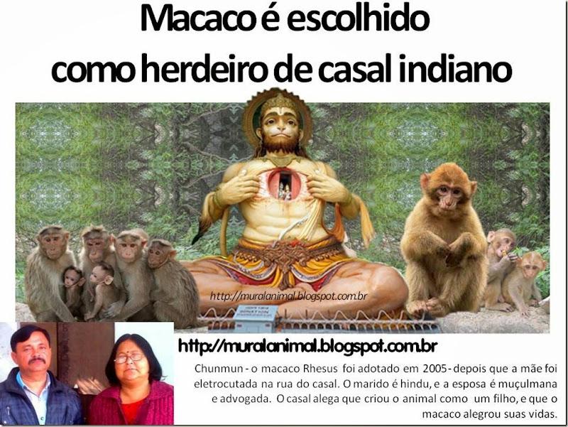 Macaco_herdeiro