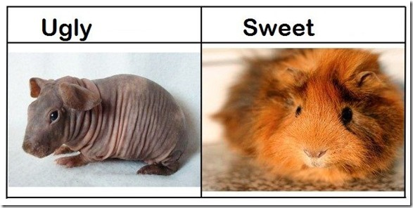 ugly-vs-sweet-3