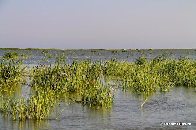 Lacul Melea 5378.JPG