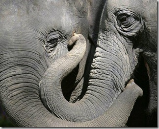 elefanti1