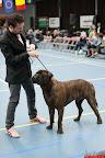 20130511-BMCN-Bullmastiff-Championship-Clubmatch-2302.jpg