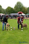 20100513-Bullmastiff-Clubmatch_31137.jpg