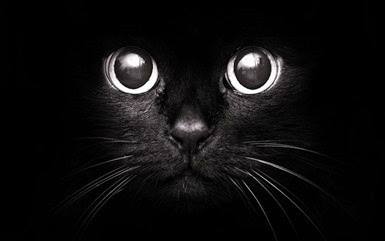 black-cat-with-black-eyes