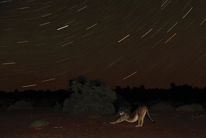 Photographs from Colors Of Kalahari by Hannes Lochner