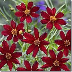flores vermelhas no jardim