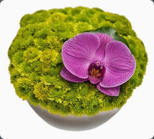 mums IMG_8956_HighRes floral art