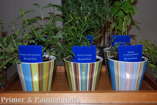 Dollar Store Pots 6 - Primer & Painted Nails