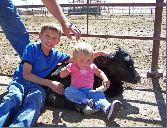 reechase baby calf