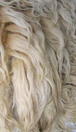Walachen Rohwolle