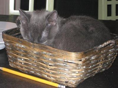 Cats Will Sleep Anywhere 15