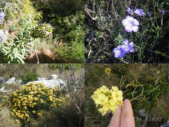2012_02260000_flors combinat.jpg