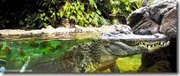 pano_aligator1