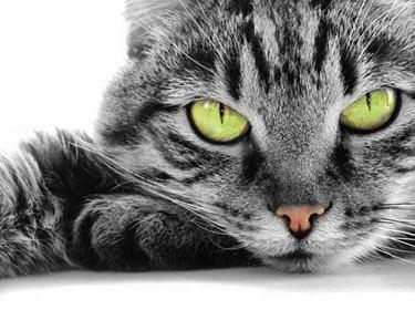 frasi-gatti