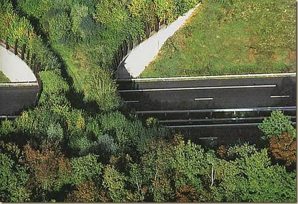 Ponts pour animaux - passages à faune (6)