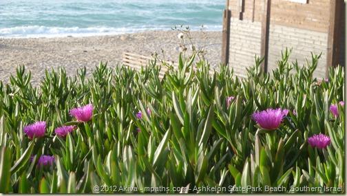 2012-04-10 Chol HaMoed Beach Ashkelon Haviva Fayga Raizel Ortal Tatti 070