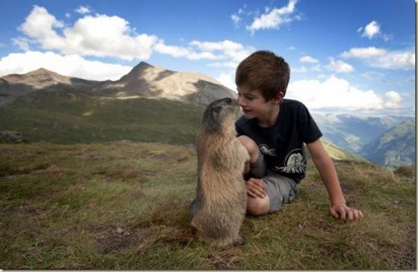 L'enfant et les marmottes-001