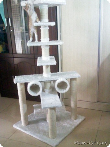 building your cat tree 1