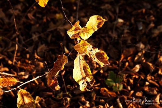 natur_20111111_blad1
