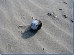 7151 Texas, South Padre Island - Beach access #3