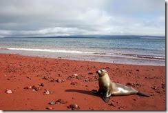 amazing-unusual-beaches-10-11