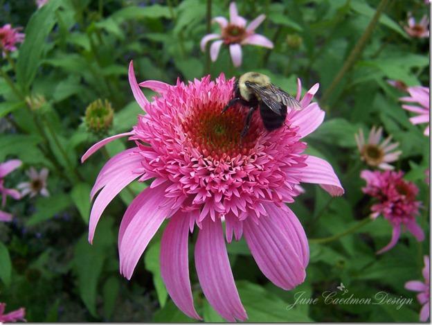 Bee_SOOC