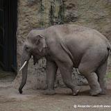 Heidelberger-Zoo (27 von 49).jpg