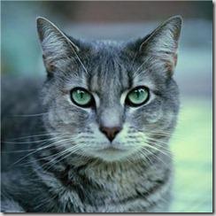 gatto[1]