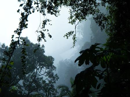 The rainforest.