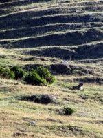 Svizec na Bistriški planini