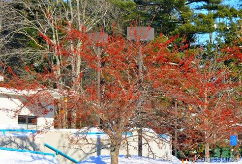 5. fruit trees-kab