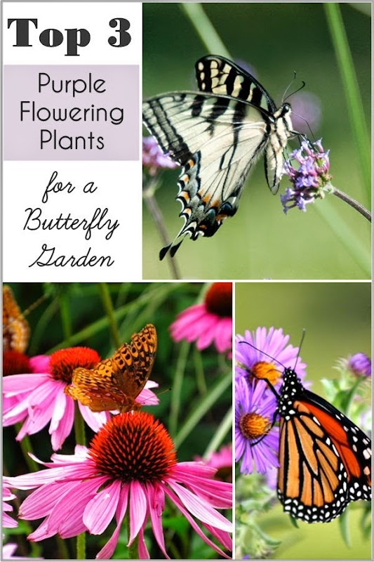My Top 3 purple flowers for Butterfly Gardens!