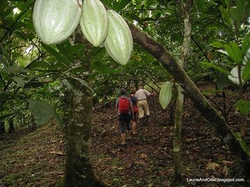 Hiking on the cacao plantation
