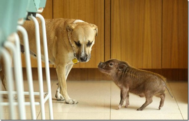 funny-animals-cute-38