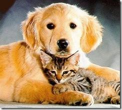 Continúa la campaña de vacunación antirrábica gratuita para caninos y felinos