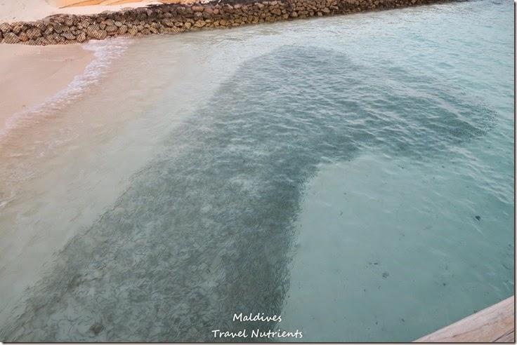馬爾地夫 Centara渡假村 (44)