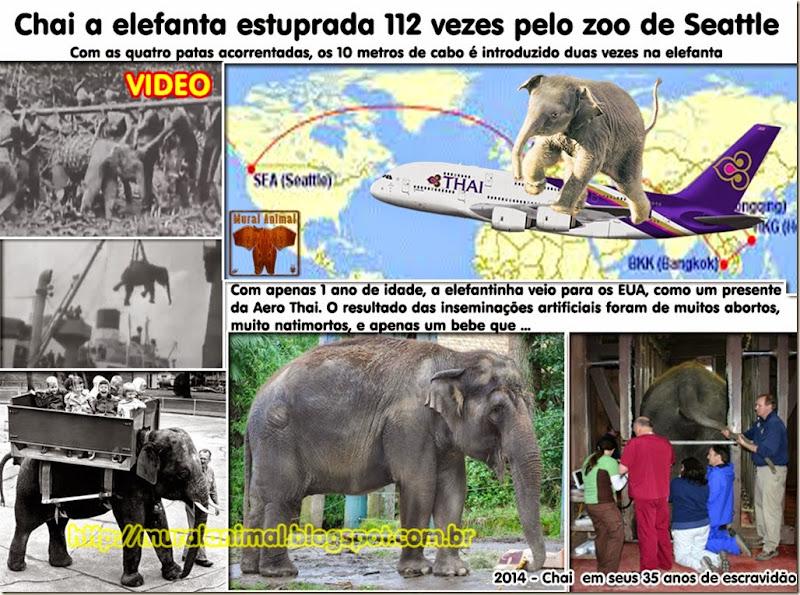 elefanta-estuprada
