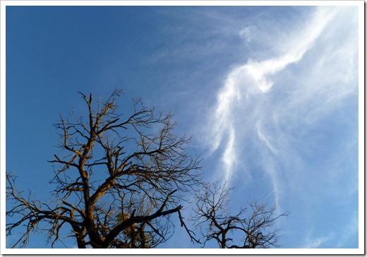 111231_trees1