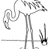 animaatjes-flamingo-88232.jpg