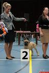 20130510-Bullmastiff-Worldcup-1043.jpg