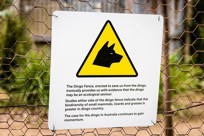 dingo-fence-1