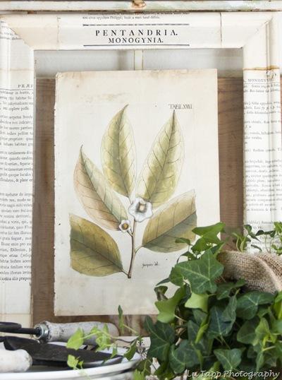 Botanical Vignette 135