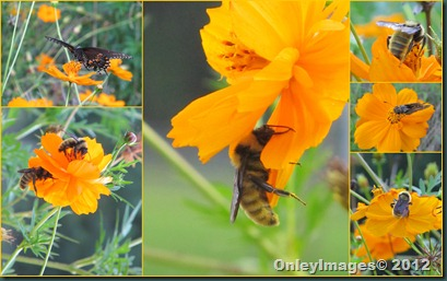 bees on flowers collage