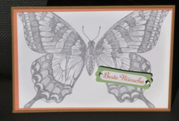 Schmetterling-groß